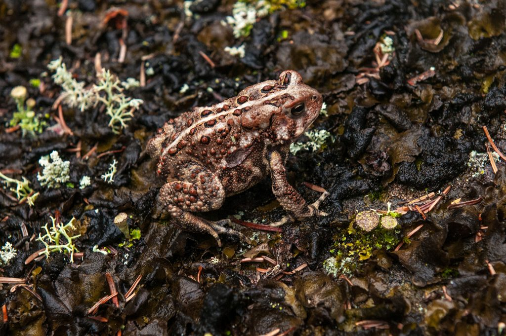 A frog at Big Trout Bay
