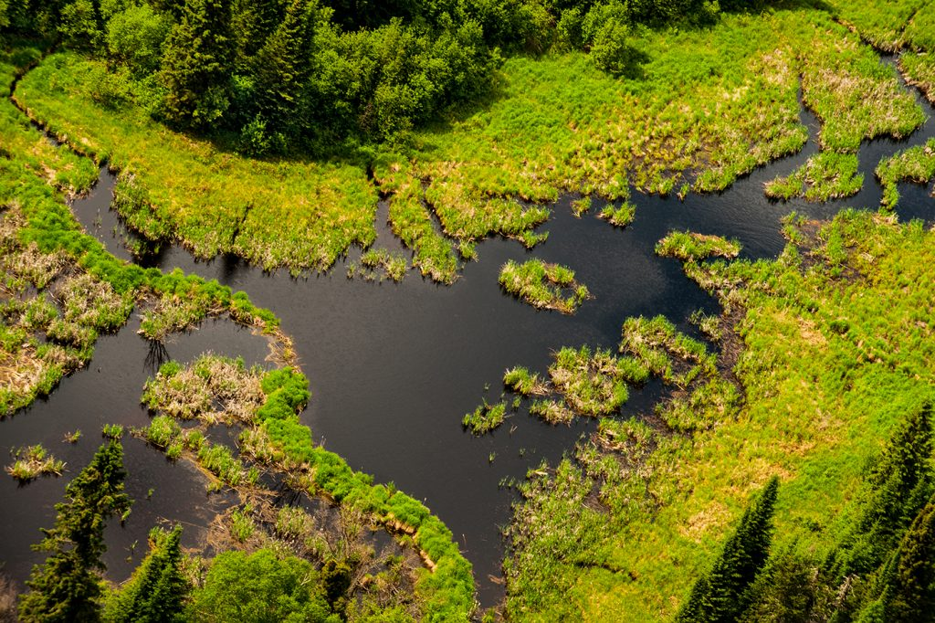 Wetlands in boreal forests surrounded by Big trout Bay