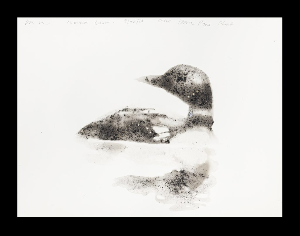 Rockman used ash from a coal-fired power plant to create this drawing of a common loon.