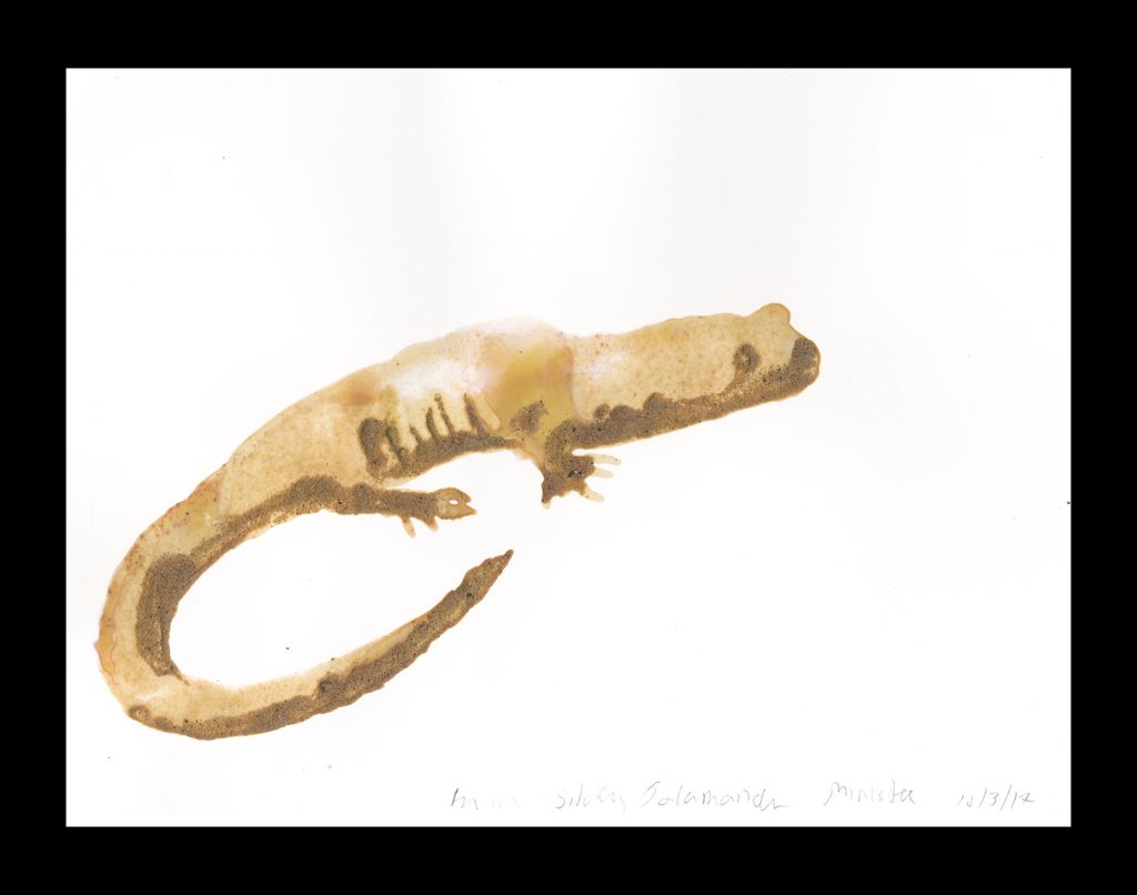 Rockman used sand from a Lake Michigan beach to create this drawing of a silvery salamander.